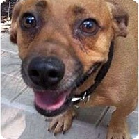 Adopt A Pet :: CeeCee - Allentown, PA