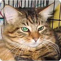 Adopt A Pet :: Marnie - Plainville, MA
