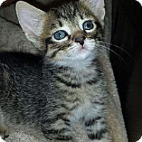 Adopt A Pet :: Marliegh - Chandler, AZ