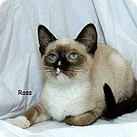 Adopt A Pet :: Ross M - Sacramento, CA