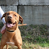 Adopt A Pet :: Luke - Demopolis, AL