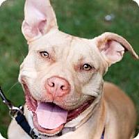 Adopt A Pet :: Pink - Atlanta, GA
