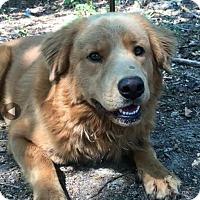 Adopt A Pet :: Chewie - Brattleboro, VT