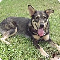Adopt A Pet :: Jeanie - Phoenix, AZ