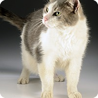 Adopt A Pet :: Rico - Cincinnati, OH