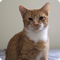 Adopt A Pet :: Oscar - Littleton, CO