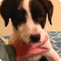 Adopt A Pet :: Josephina - Trenton, NJ