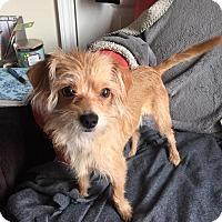 Adopt A Pet :: Benny - Gainesville, FL