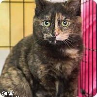Adopt A Pet :: Narita - Merrifield, VA