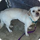 Adopt A Pet :: Wednesday