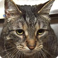 Adopt A Pet :: TIGGER - New Haven, CT