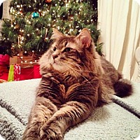 Adopt A Pet :: Rody Courtesy Post - Absecon, NJ