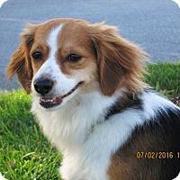 Adopt A Pet :: Daisy Mae - Lincolndale, NY