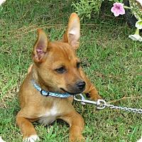 Adopt A Pet :: RIKKO - Bedminster, NJ