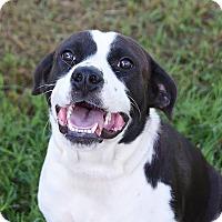 Adopt A Pet :: TARA - Pilot Point, TX