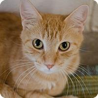 Adopt A Pet :: Mika - Greenwood, SC