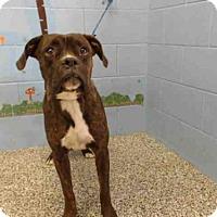 Adopt A Pet :: A498670 - San Bernardino, CA
