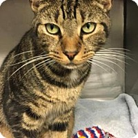 Adopt A Pet :: Magnus-PetSmart Marlton - Voorhees, NJ