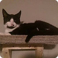 Adopt A Pet :: Michonne - THORNHILL, ON