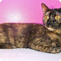 Adopt A Pet :: Alexis - Glendale, AZ