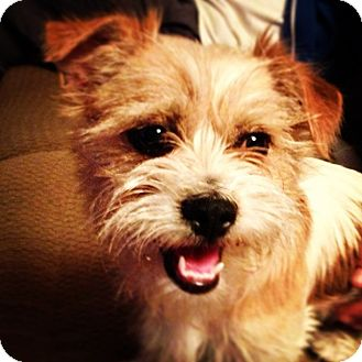 Terrier (Unknown Type, Medium) Mix Dog for adoption in Mission Viejo, California - LACI