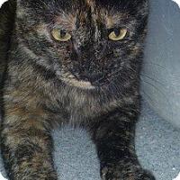 Adopt A Pet :: Talia - Hamburg, NY
