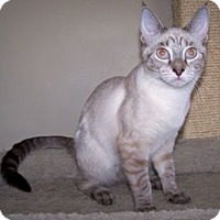 Adopt A Pet :: K-Miller1-Bebe - Colorado Springs, CO