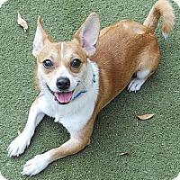 Adopt A Pet :: Dexter - San Francisco, CA