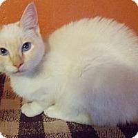 Adopt A Pet :: Polar Express - Ennis, TX
