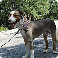 Adopt A Pet :: Eckert - Justin, TX
