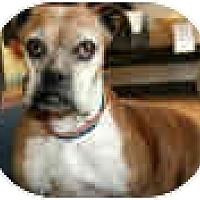 Adopt A Pet :: GERTRUDE - Sunderland, MA