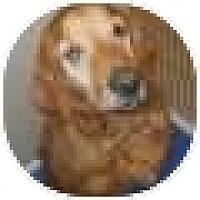 Adopt A Pet :: Finley - Denver, CO