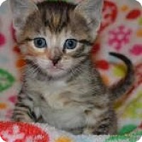 Adopt A Pet :: Mia  & Lucie - Island Park, NY