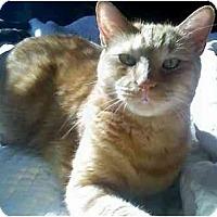 Adopt A Pet :: Zen - Alexandria, VA