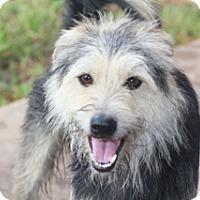 Adopt A Pet :: Hastings - Norwalk, CT