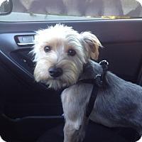 Adopt A Pet :: Brandson - Los Angeles, CA