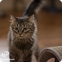 Adopt A Pet :: Krista - Fountain Hills, AZ