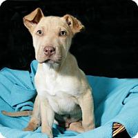 Adopt A Pet :: Austin - Lufkin, TX