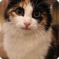 Adopt A Pet :: Camelia - Sacramento, CA