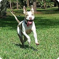 Adopt A Pet :: Elsie - Ft. Myers, FL