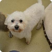 Adopt A Pet :: S/C Pudding - Miami, FL