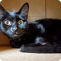 Adopt A Pet :: Gatsby - Salisbury, MA