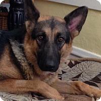 Adopt A Pet :: Agnes - Hillside, IL