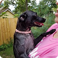 Adopt A Pet :: Momma Angie and 1 pups - Wyoming, MI