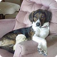 Adopt A Pet :: Rico - Toronto, ON