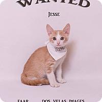 Adopt A Pet :: Jesse James - Riverside, CA