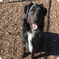 Adopt A Pet :: BULLET - Urbana, IL