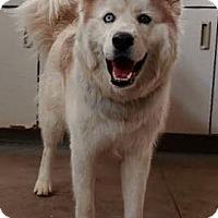 Adopt A Pet :: Henry - Omaha, NE