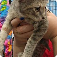 Adopt A Pet :: Twyla - Dallas, TX