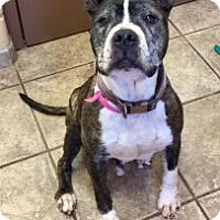 Adopt A Pet :: Magnis 111307 - Joplin, MO